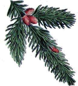 pine conelefttop